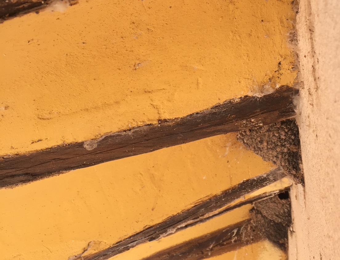 nidos de golondrinas